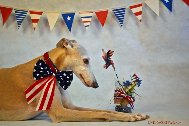 Little Miss Red, White and Blue -- Tales and Tails