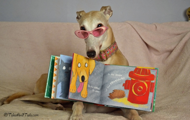 I'm An Open Book -- Tales and Tails