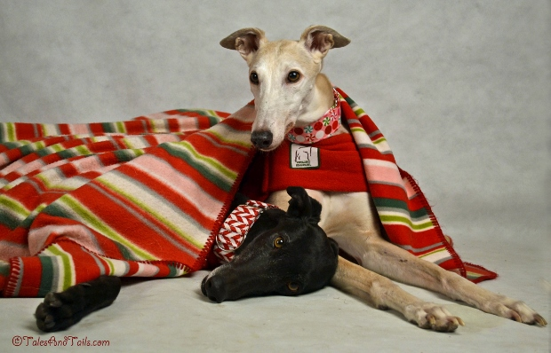Nestled All Snug -- Tales and Tails