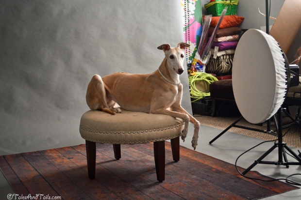 Graceful Greyhound Model at Work -- Tales and Tails