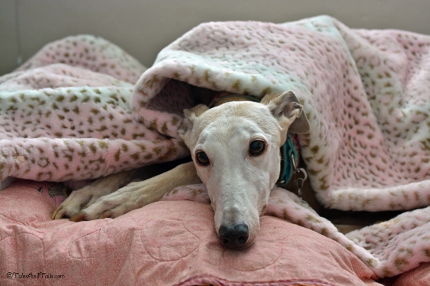 Snug As A Bug In A Rug -- Tales and Tails