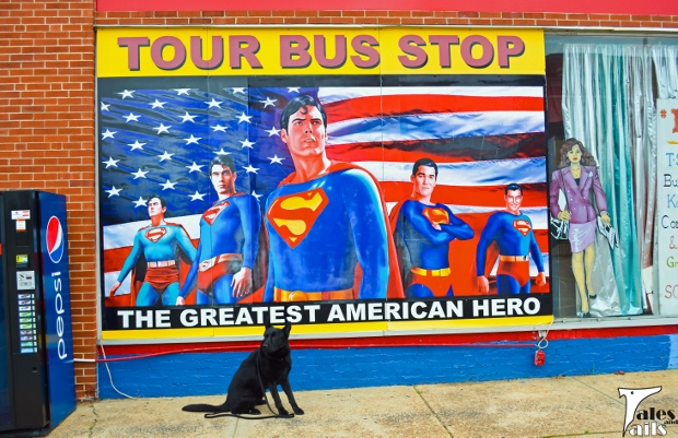 The Greatest American Hero -- Tales and Tails
