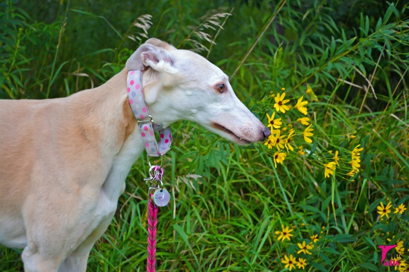 The Sweet Smell of Summer -- Tales and Tails