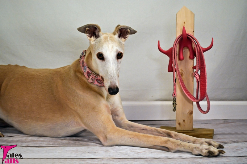 Home Is Where You Hang Your Leash -- Tales and Tails