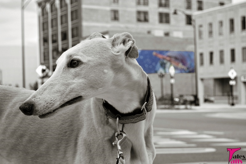 Hound In The City -- Tales and Tails