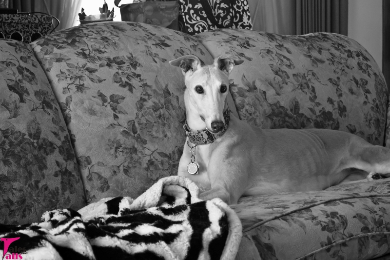 Queen of the Couch -- Tales and Tails