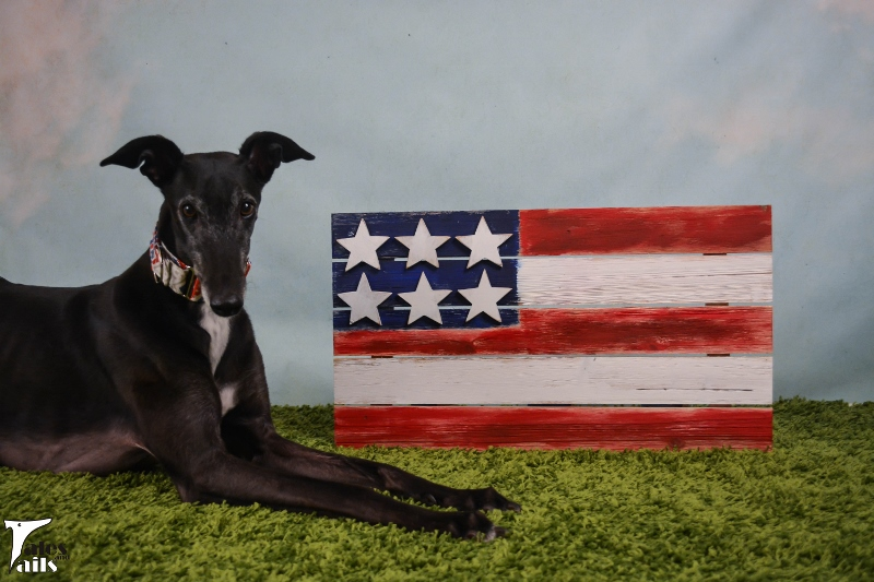 Star Spangled Hound -- Tales and Tails