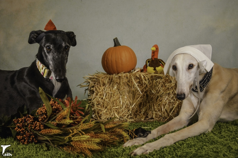 Thankful For Much -- Tales and Tails