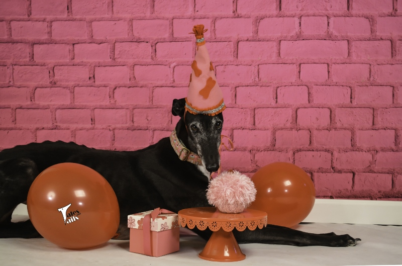Birthday Sweetheart -- Tales and Tails