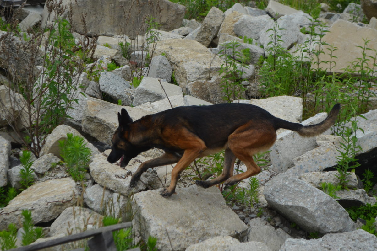 K9 Kovu searches at a SDONA seminar