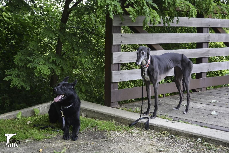 Bridging The Gap -- Tales and Tails