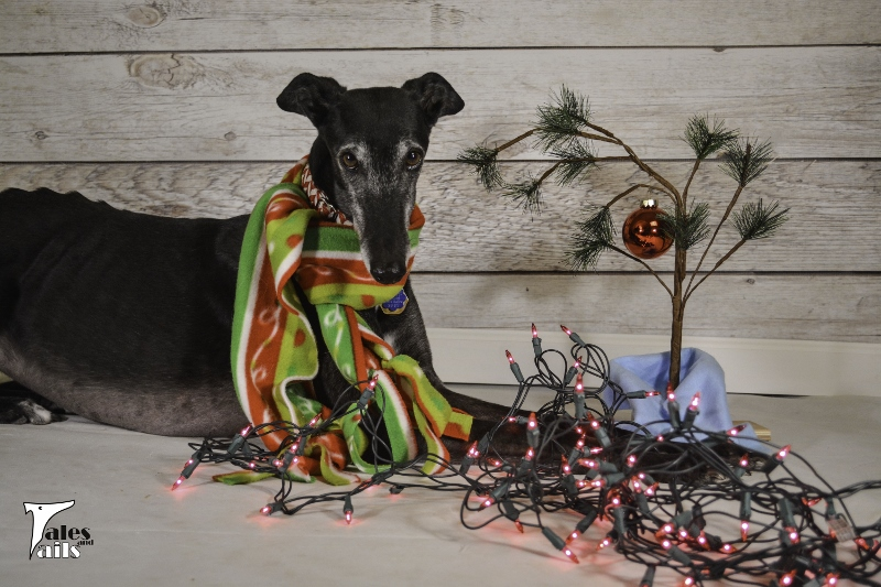 Just Add Love (And Sparkly Lights) -- Tales and Tails
