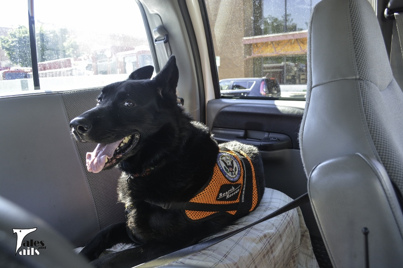 Hanging Out in the Back Seat -- Tales and Tails