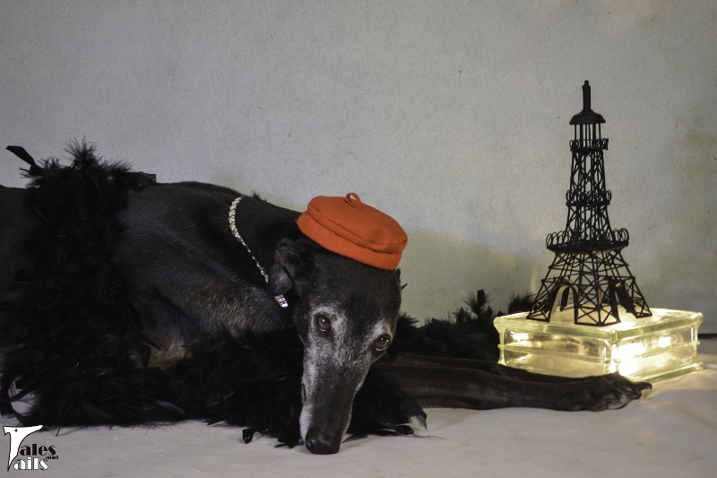 Paris, Here I Come -- Tales and Tails