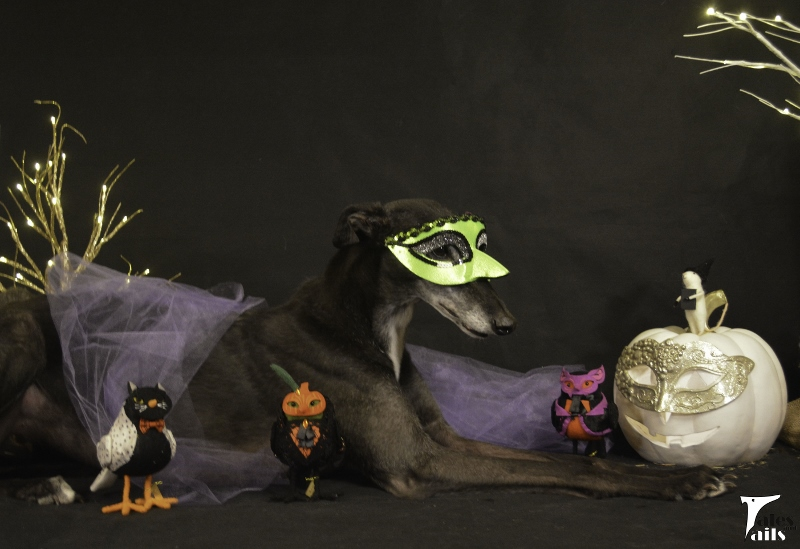 The Masquerade Ball -- Tales and Tails