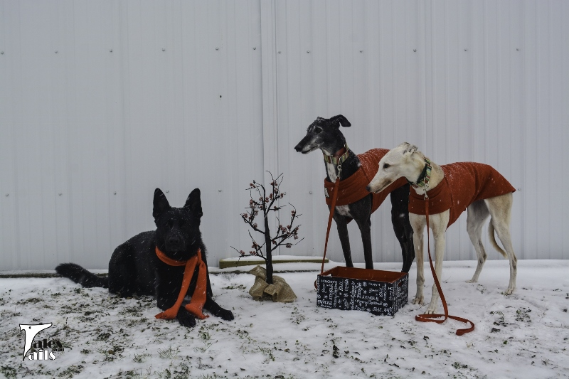 On The Nice List -- Tales and Tails
