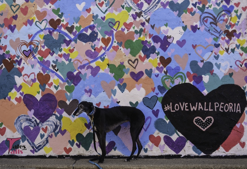 The Love Wall -- Tales and Tails